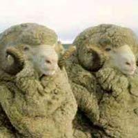 Merino wol kleding en de voordelen
